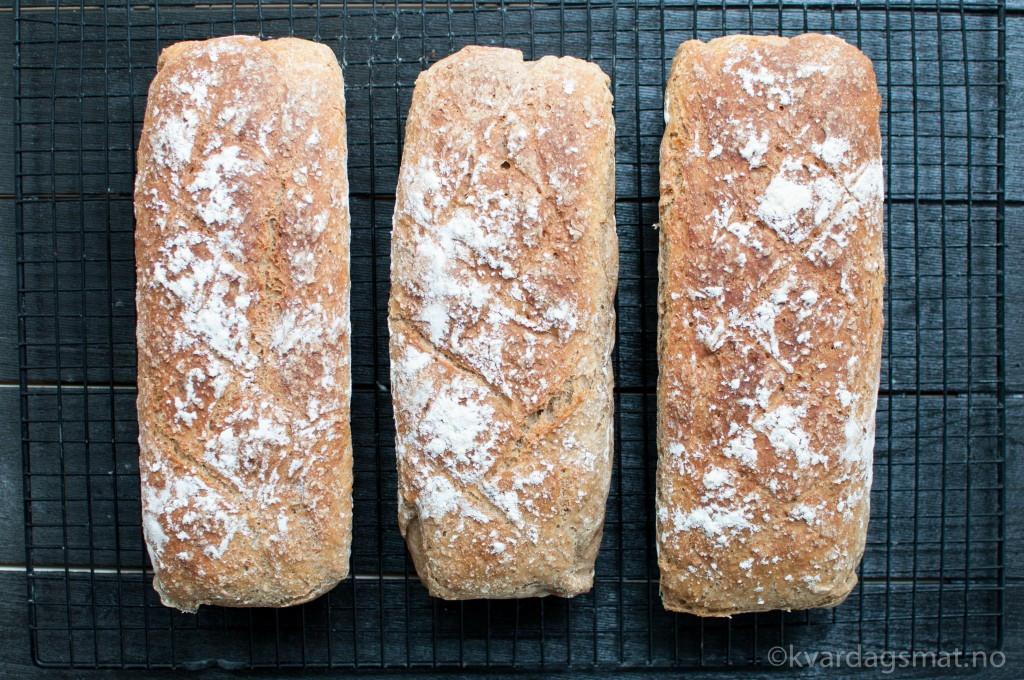 halvgrove brød