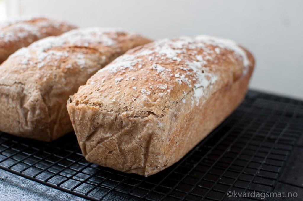 grovt brød